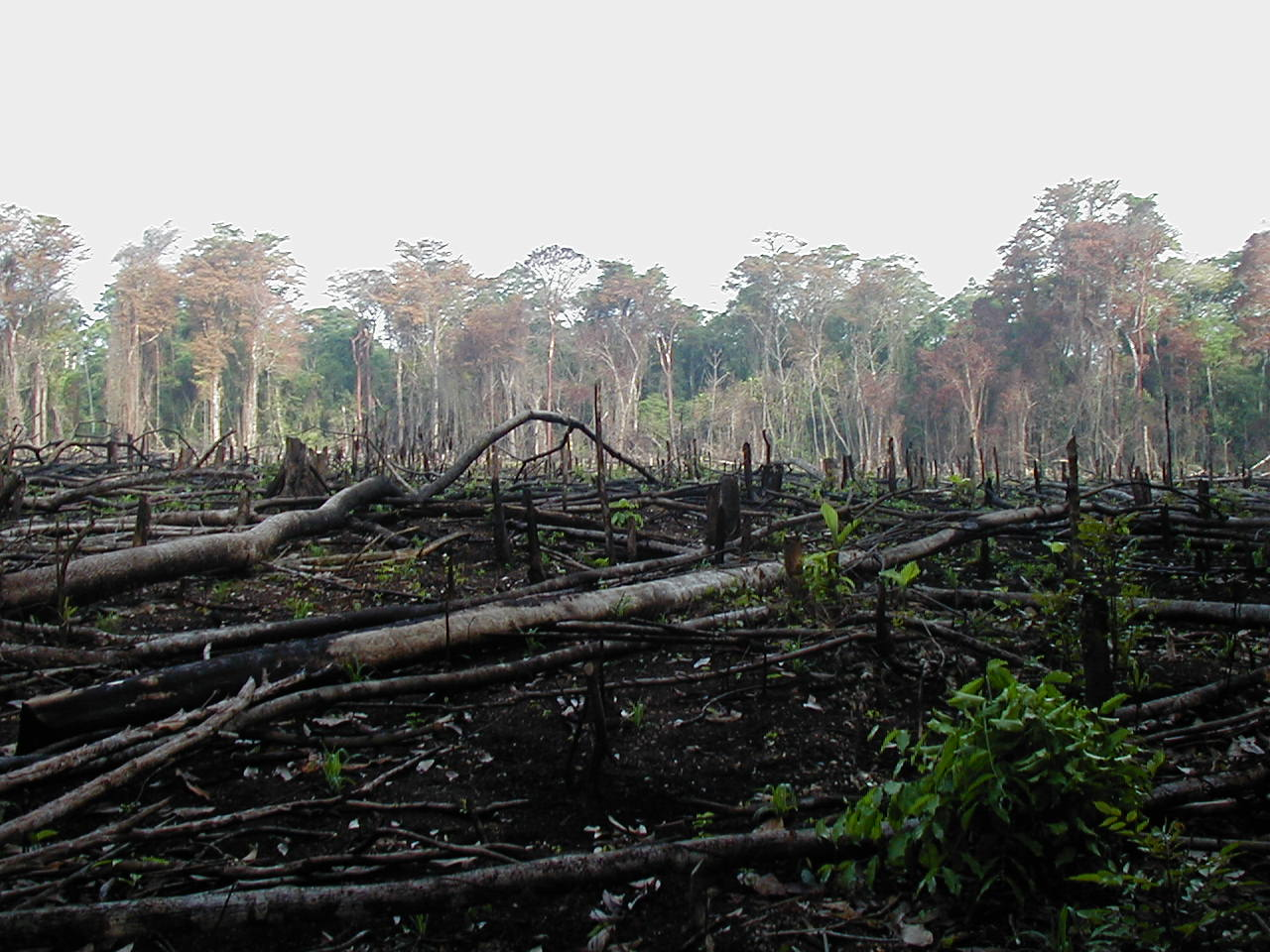 the environmental tragedy of coastal erosion essay Tragedy of the commons tragedy of the commons tragedy of  deforestation soil erosion is a natural process but most of the human  environmental science essay.