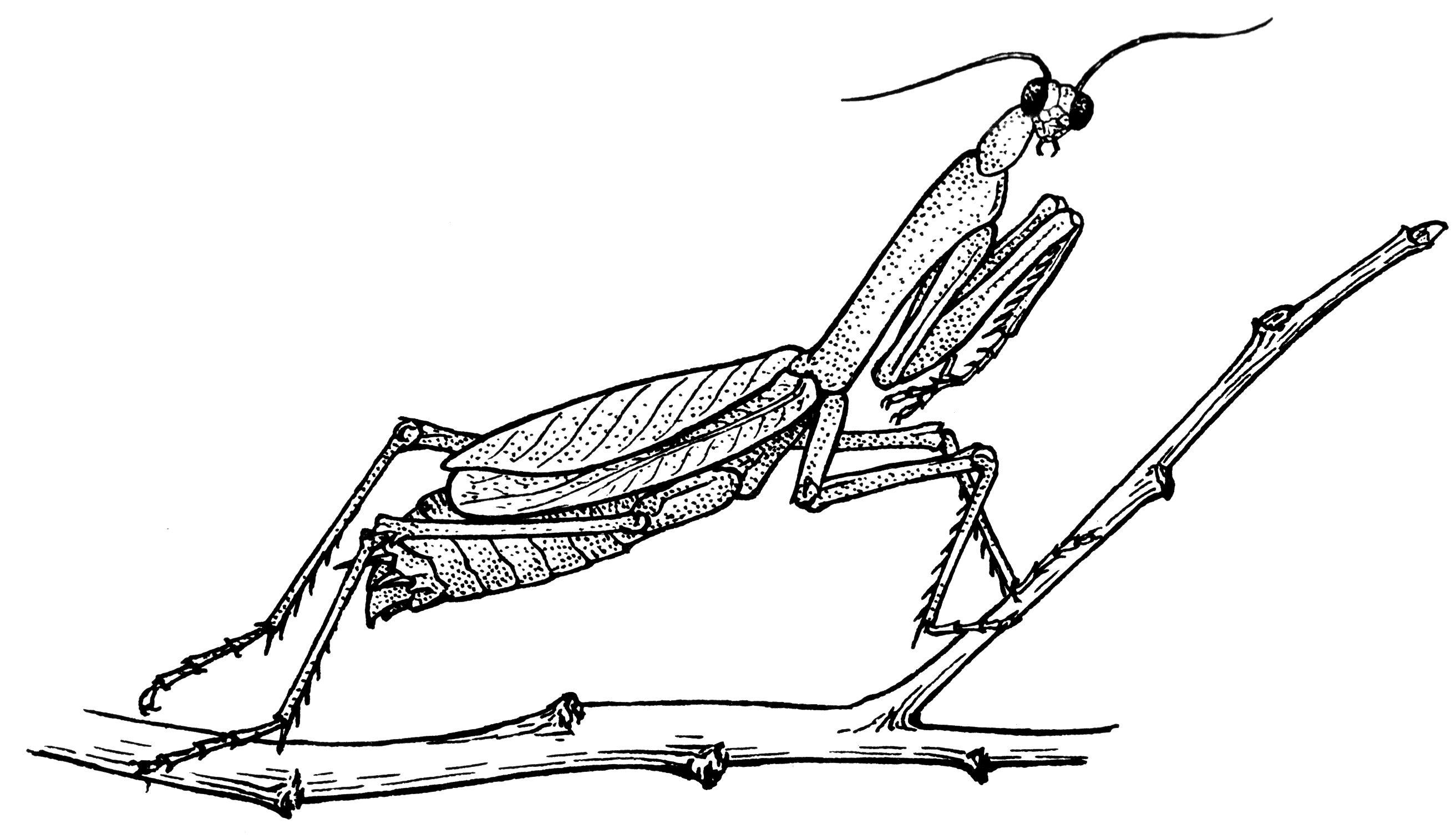 file mantis psf png wikimedia commons