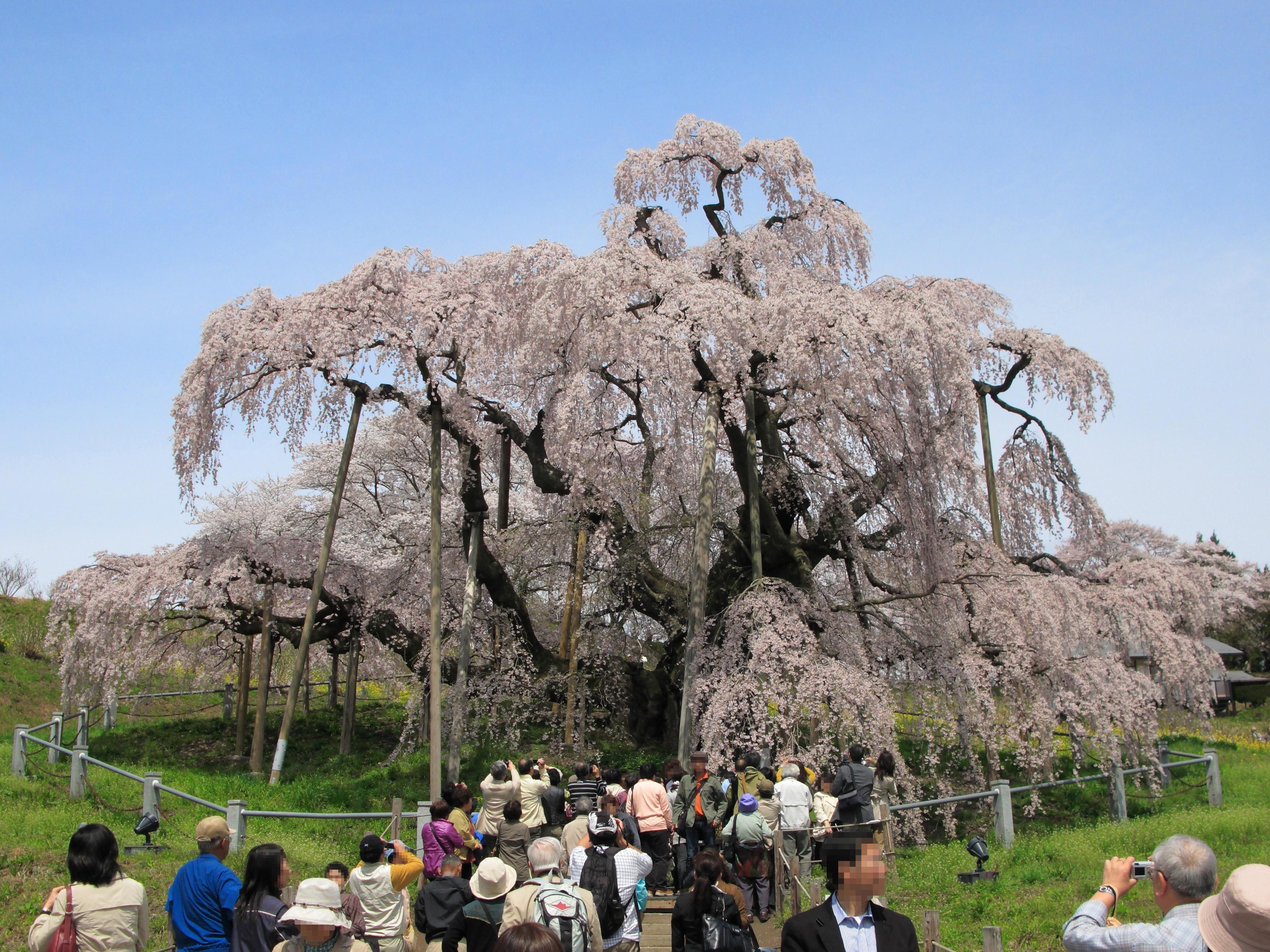 https://upload.wikimedia.org/wikipedia/commons/8/8f/Miharu_Miharu-Takizakura_Front_1.jpg