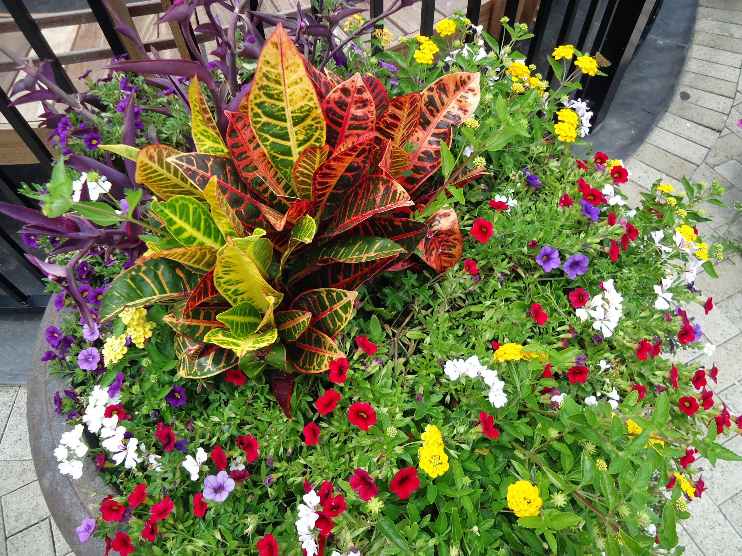 Image result for plants