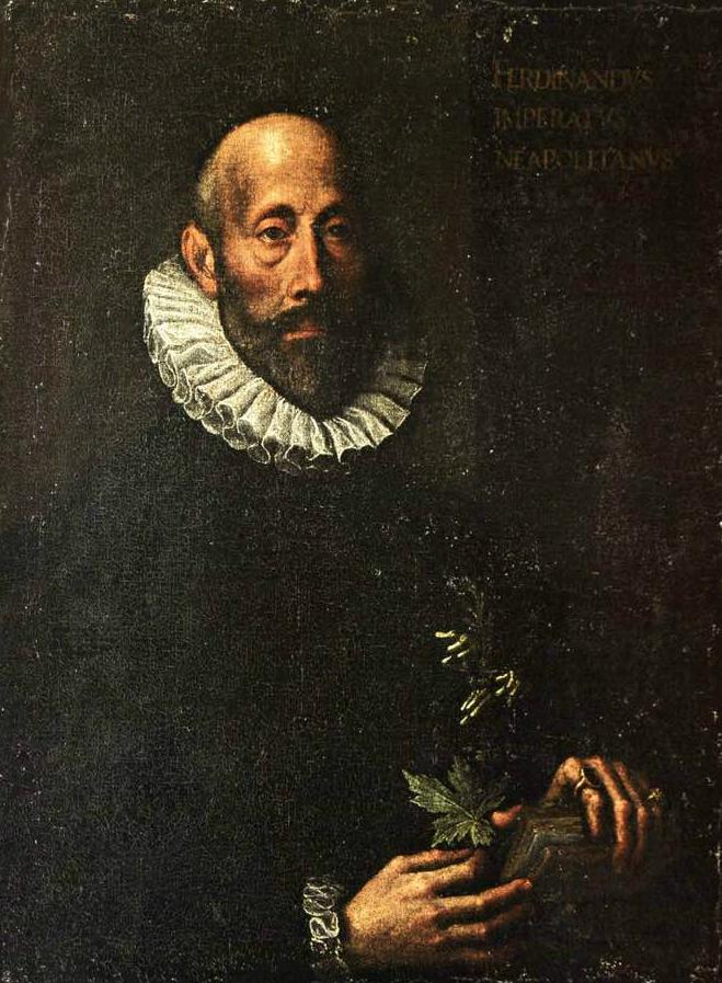 Portrait of Ferrante Imperato