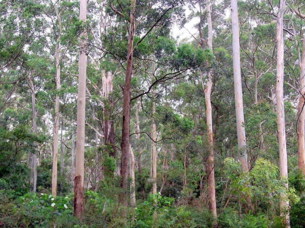 File Sheldon Forest Australia Jpg Wikimedia Commons