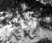 1977 Pacific hurricane season