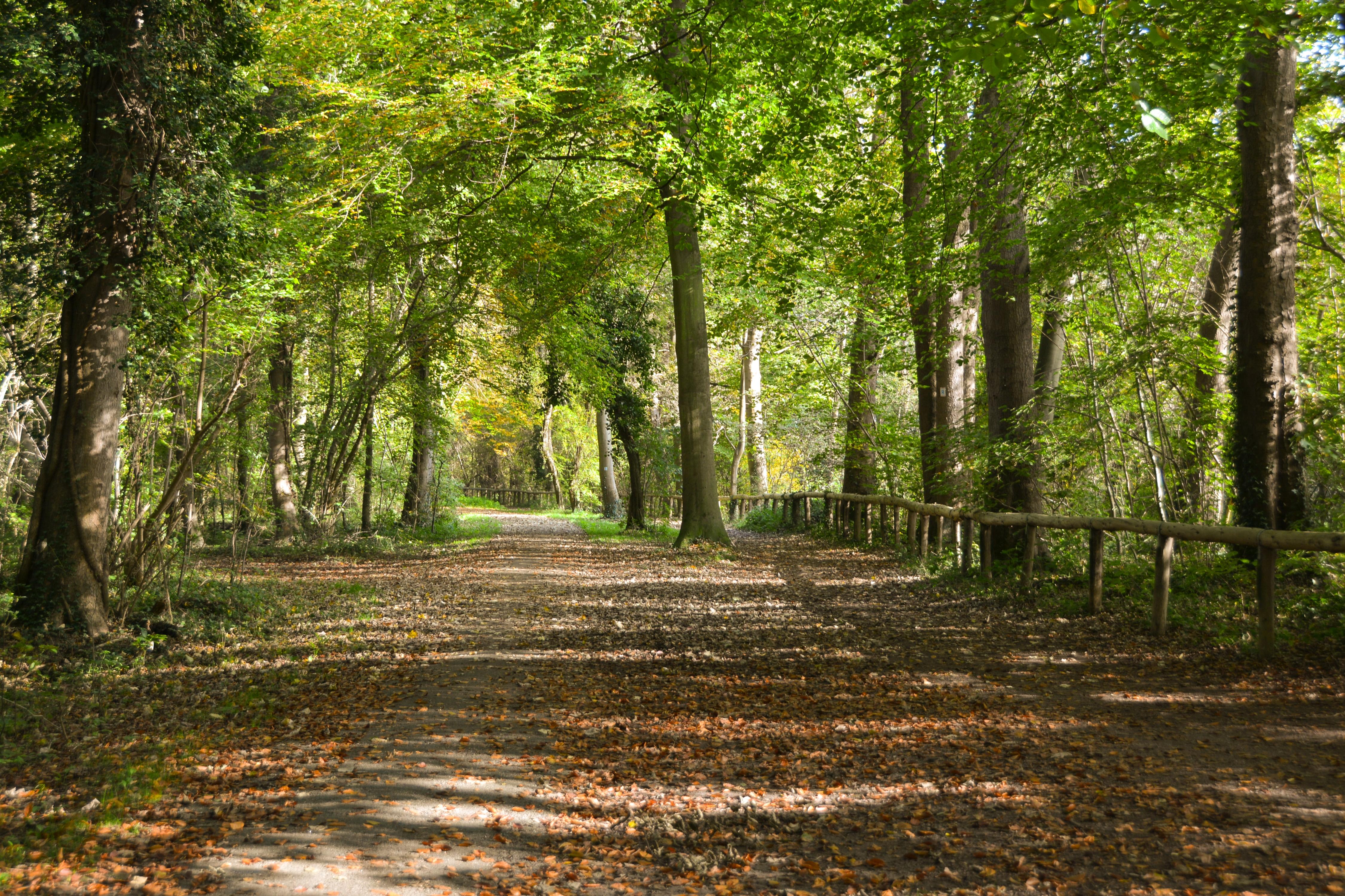 807bfcd5e07015 File Waldpark Mannheim Silberpappelschneise.jpg - Wikimedia Commons
