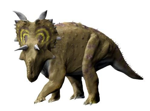 File:Xenoceratops NT s...