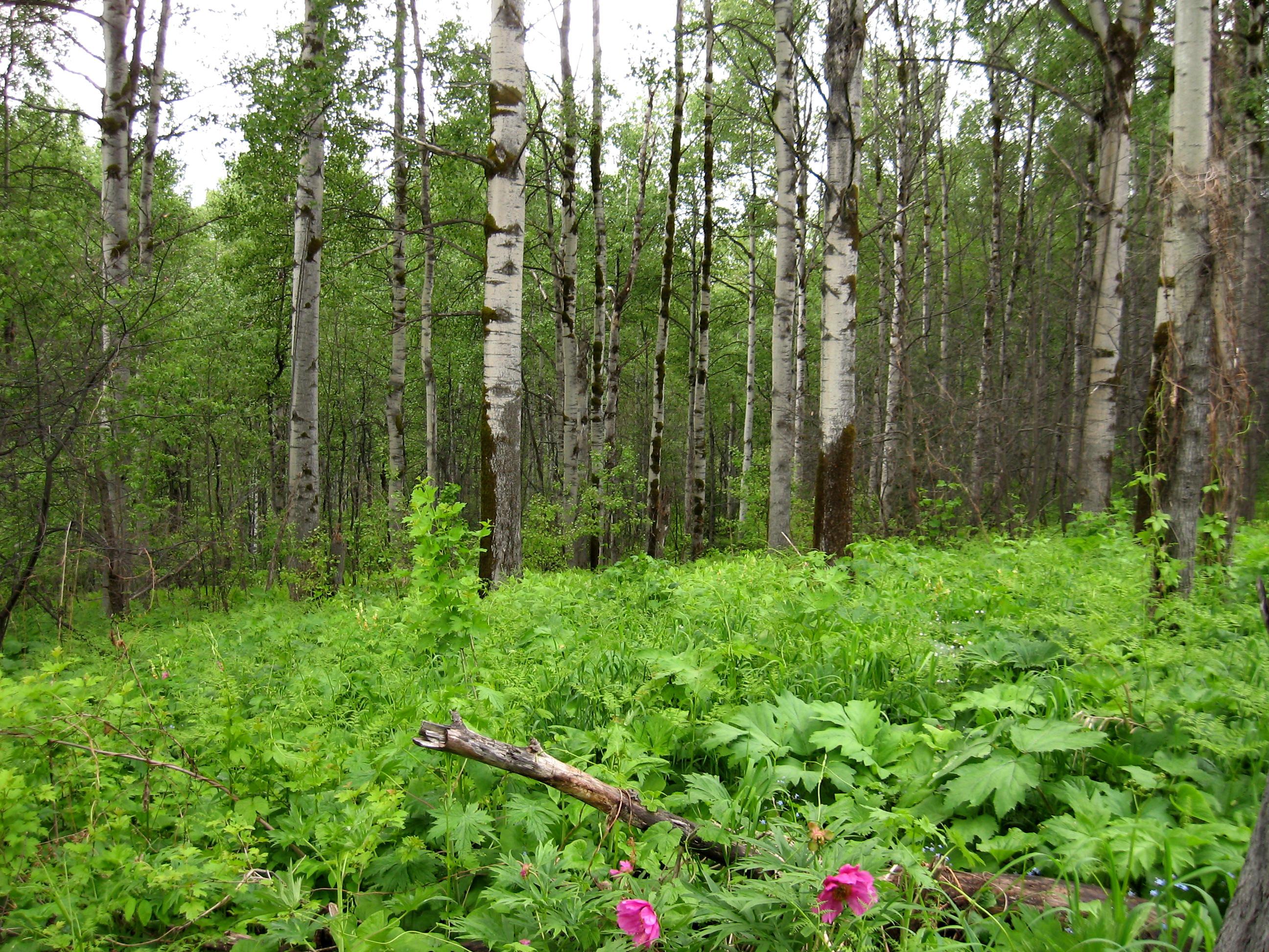 растительность нижегородской области фото бронемашин выступает