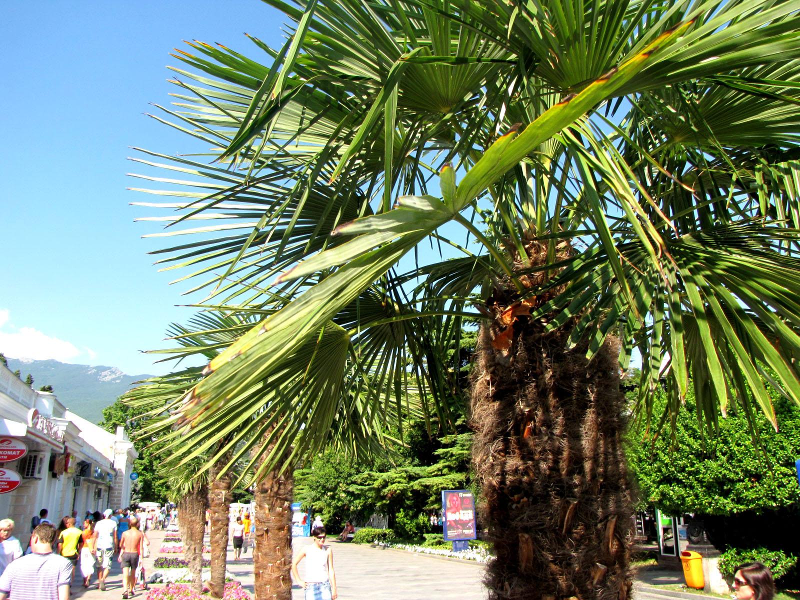 Что посмотреть на пальме