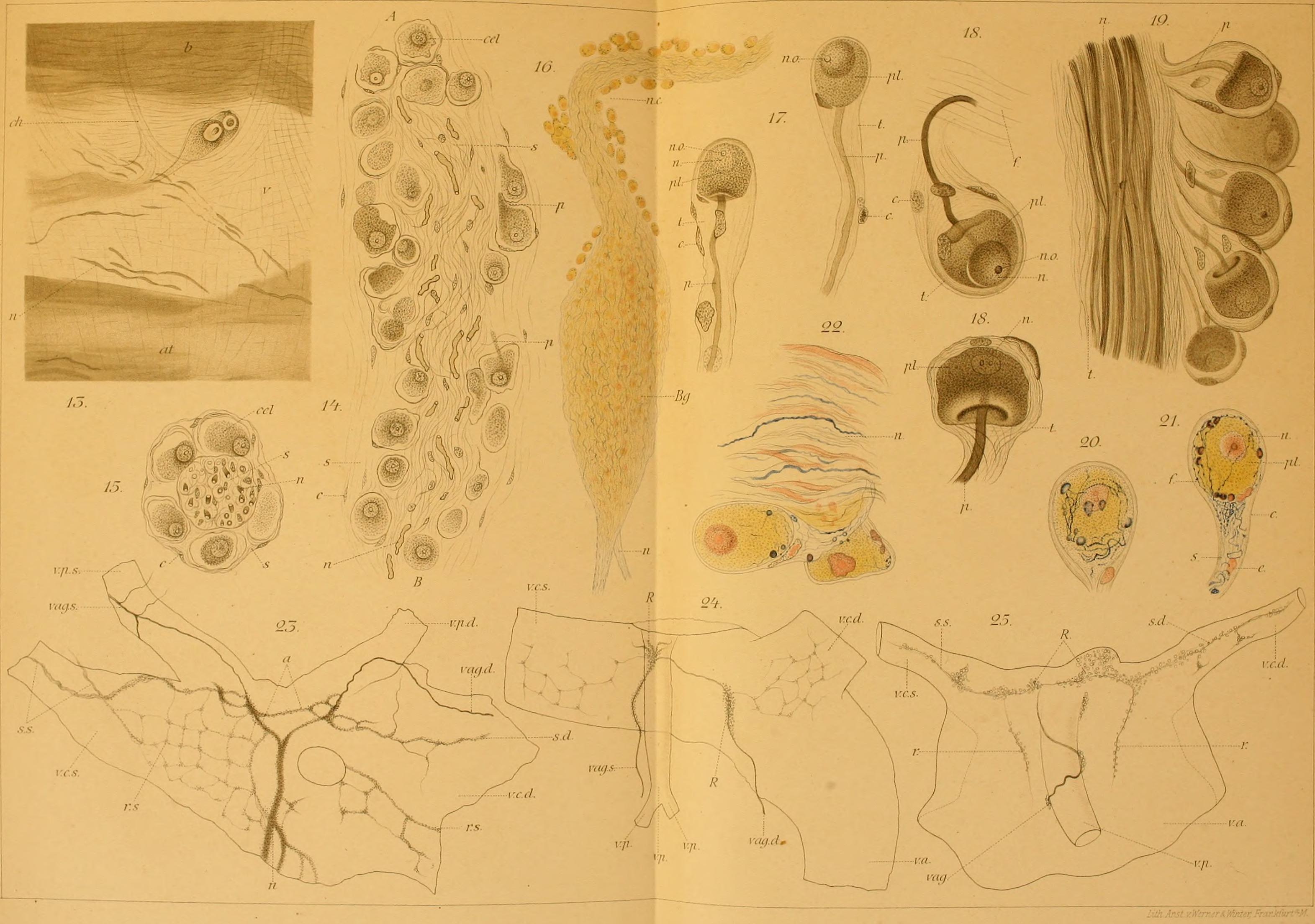 File:Archiv für mikroskopische Anatomie (1865) (19707825733).jpg ...