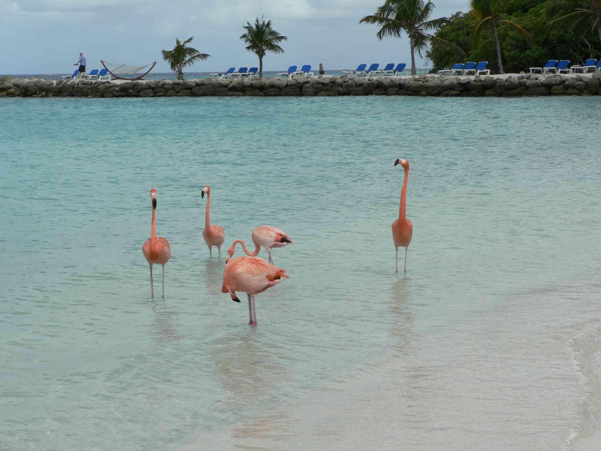 Aruba Desalination Plant Tour