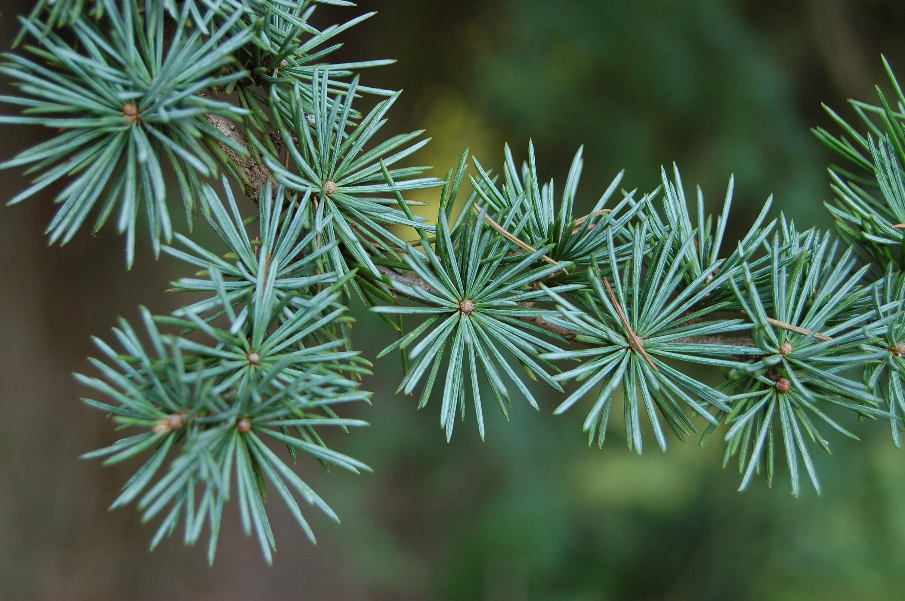 UBC Tree and Shrub Part 2 | Just another UBC Blogs site