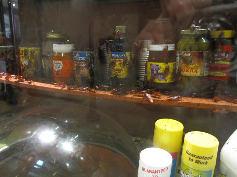 Audubon Insectarium Roach Infestation