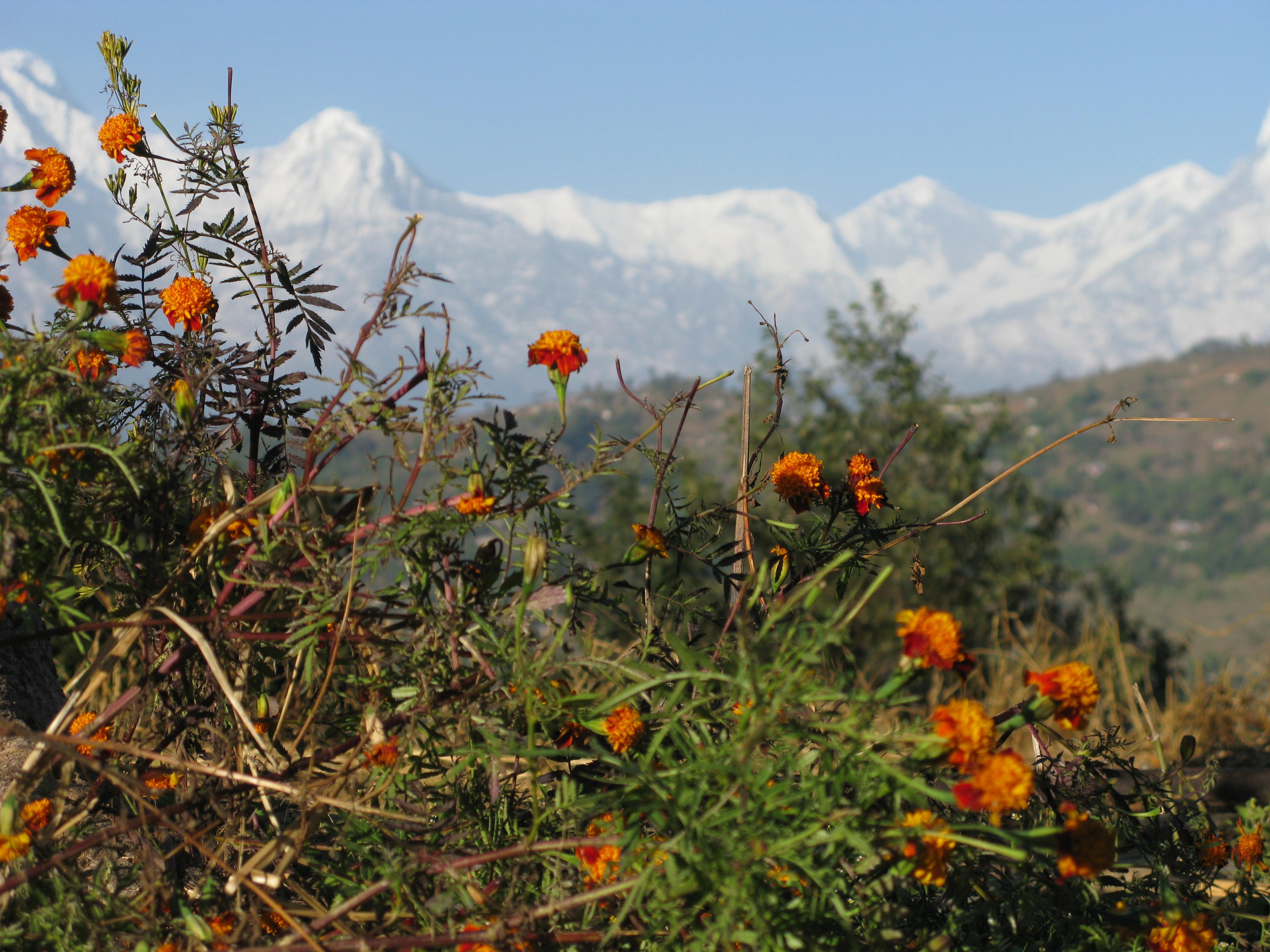 Filebeautiful scenery of mountain with flowersg wikimedia commons filebeautiful scenery of mountain with flowersg izmirmasajfo