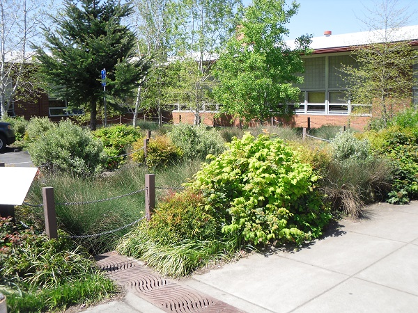 File:Bioretention system, or rain garden, in Portland, US.jpg