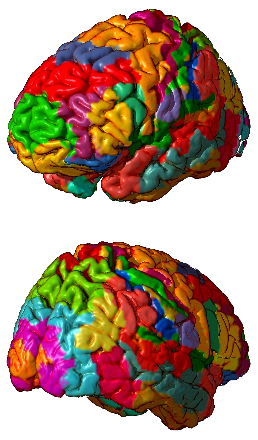 Brodmann Area Wikipedia Simple Diagram Of The Human Brain Showing Its Primary Divisions