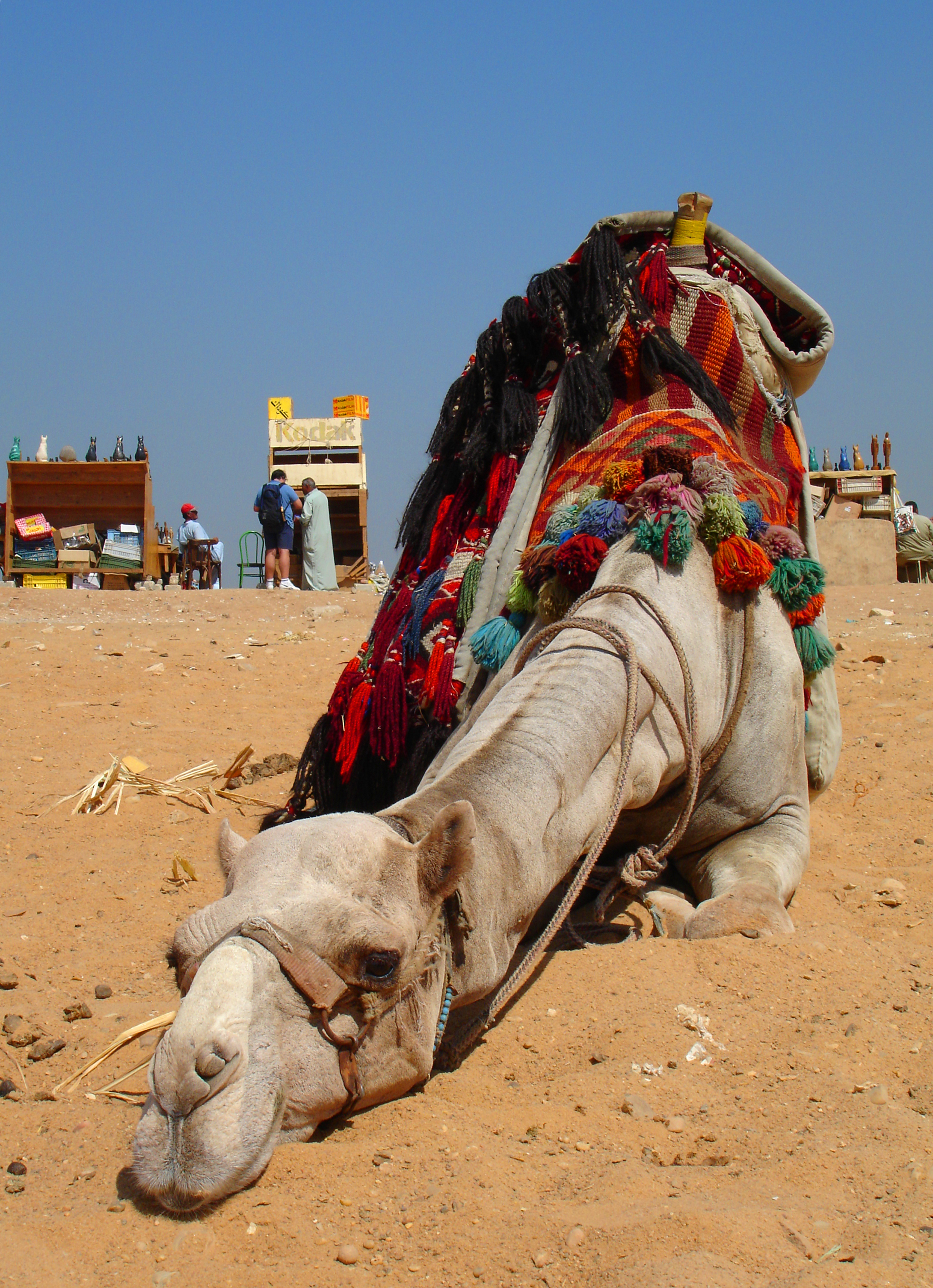 how to ride a camel in egypt