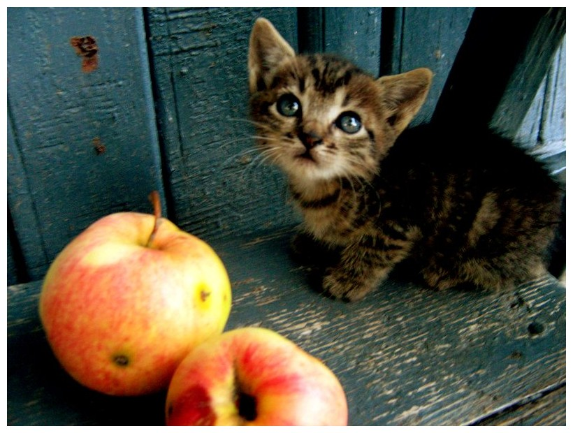 Fichier:Cici cat.jpg
