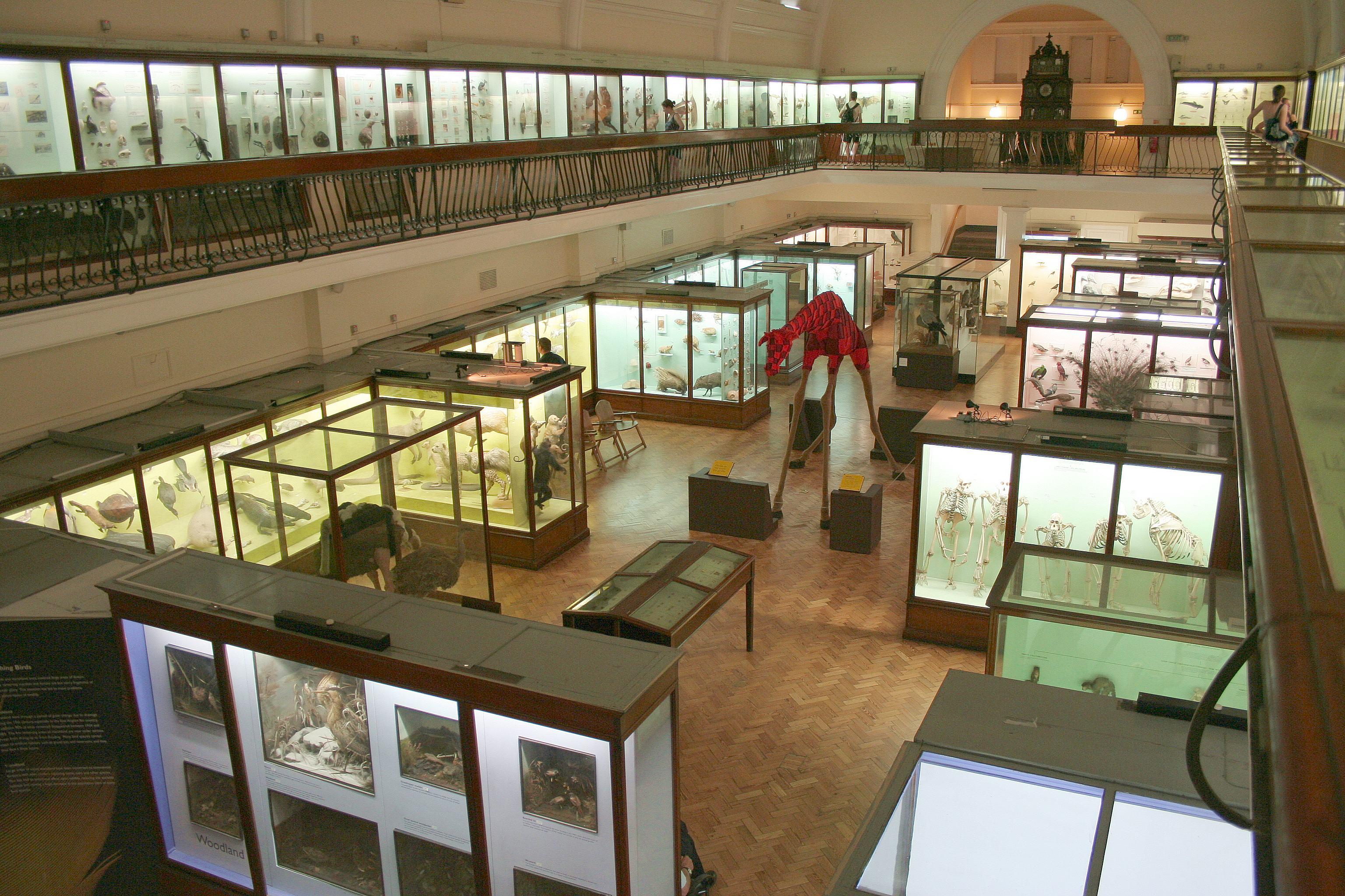 Horniman Museum Natural History Gallery