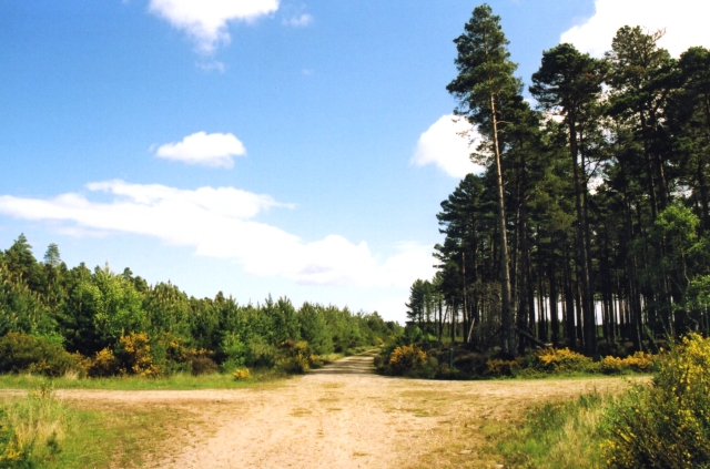 Culbin Forest - geograph.org.uk - 13013