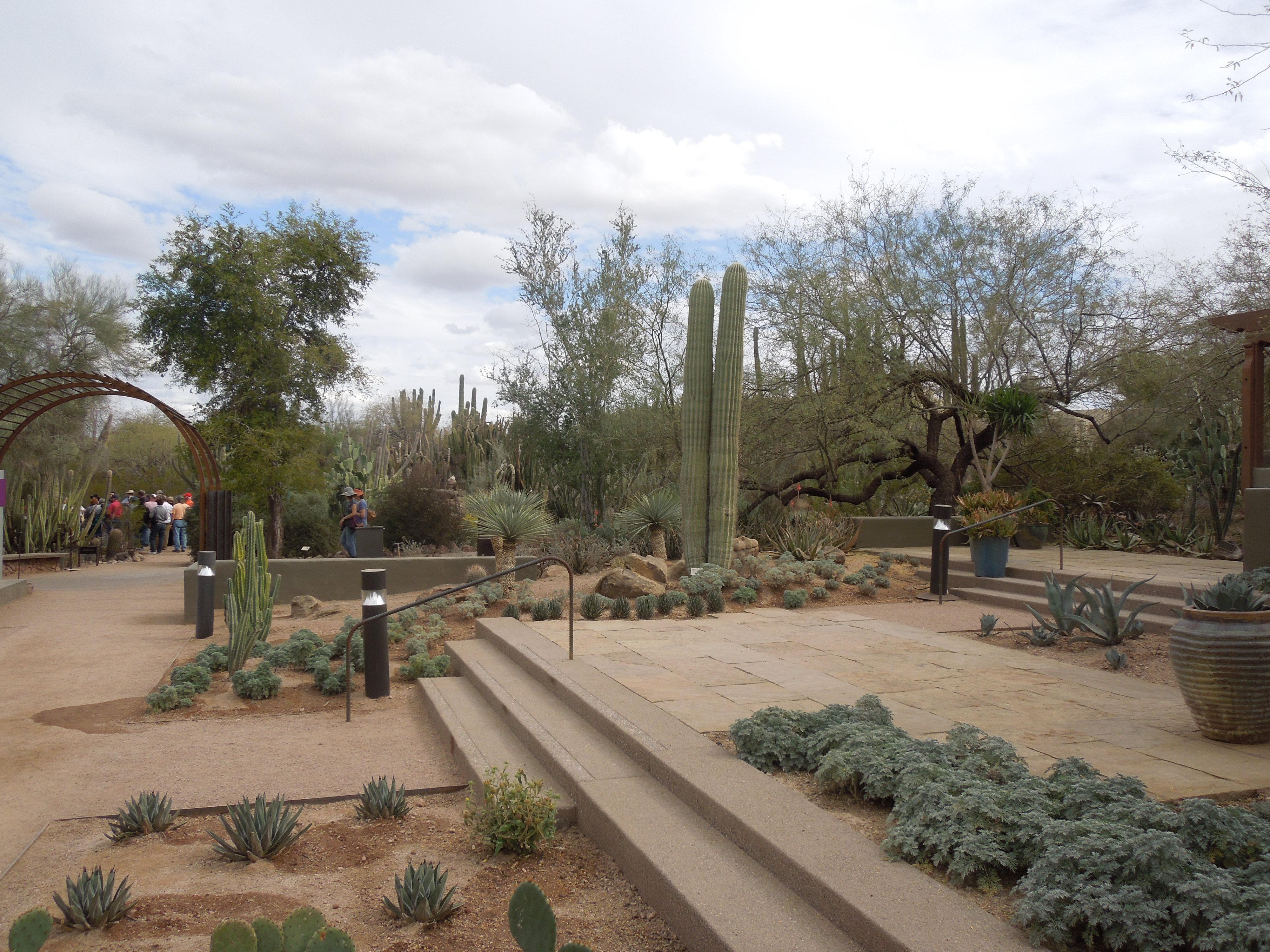 File Desert Botanical Garden Phoenix Arizona 15 Jpg