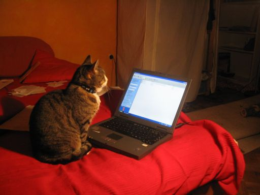 Kitty with Laptop