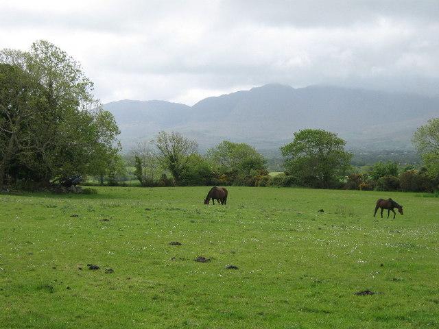 File:Horses at Lismacfinnin - geograph.org.uk - 1316763.jpg