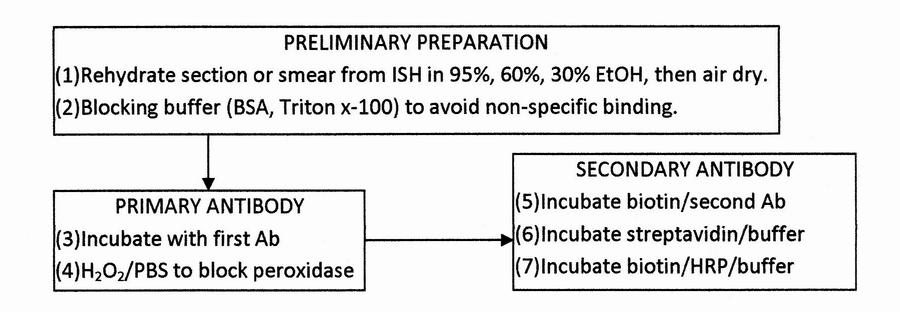 Line And Block Organizational Chart: Immunohistochemistry flow chart.jpg - Wikimedia Commons,Chart