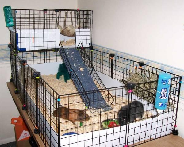 File ku ica za zamor i e jpg wikimedia commons for Wire guinea pig cages