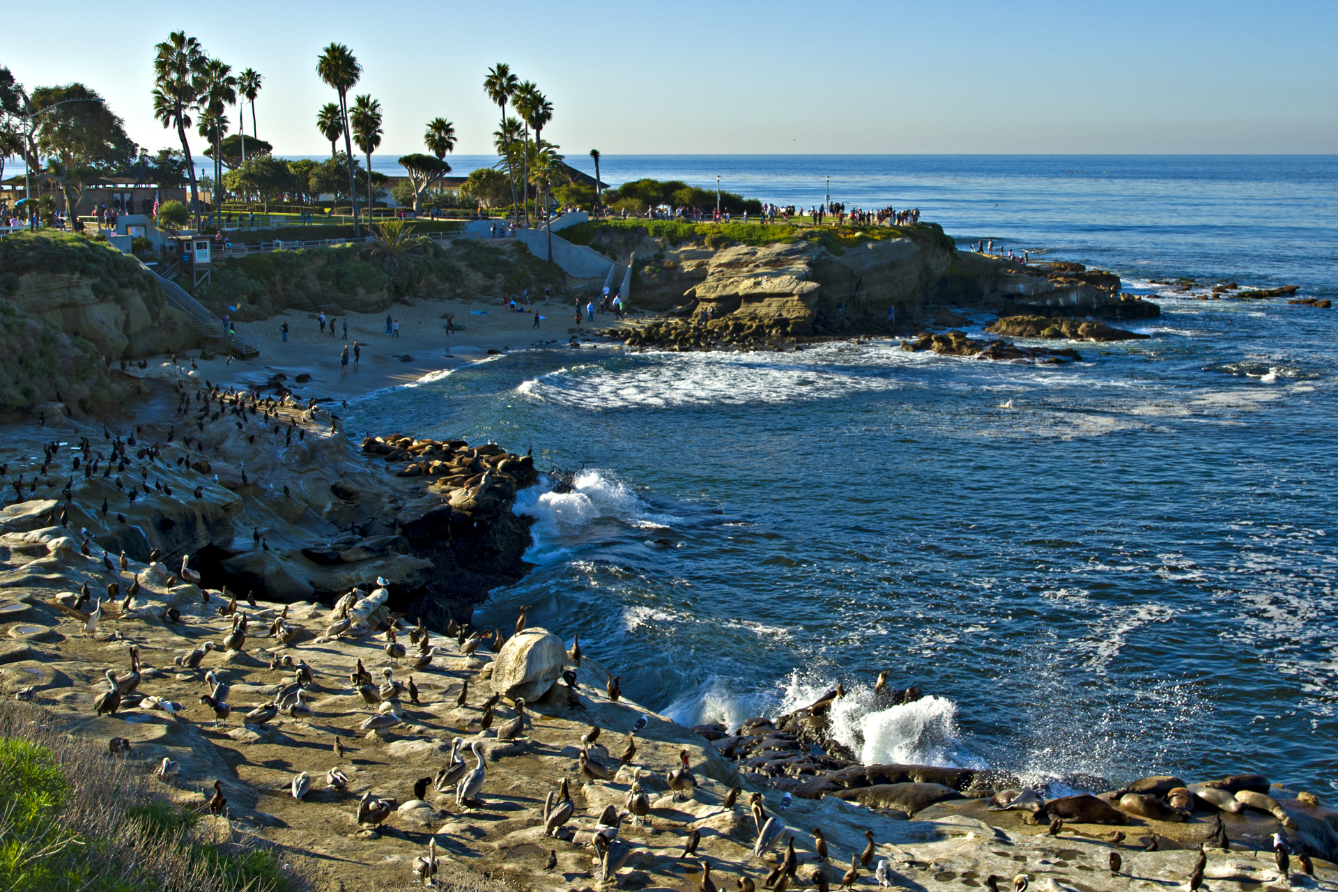 Dating in la jolla