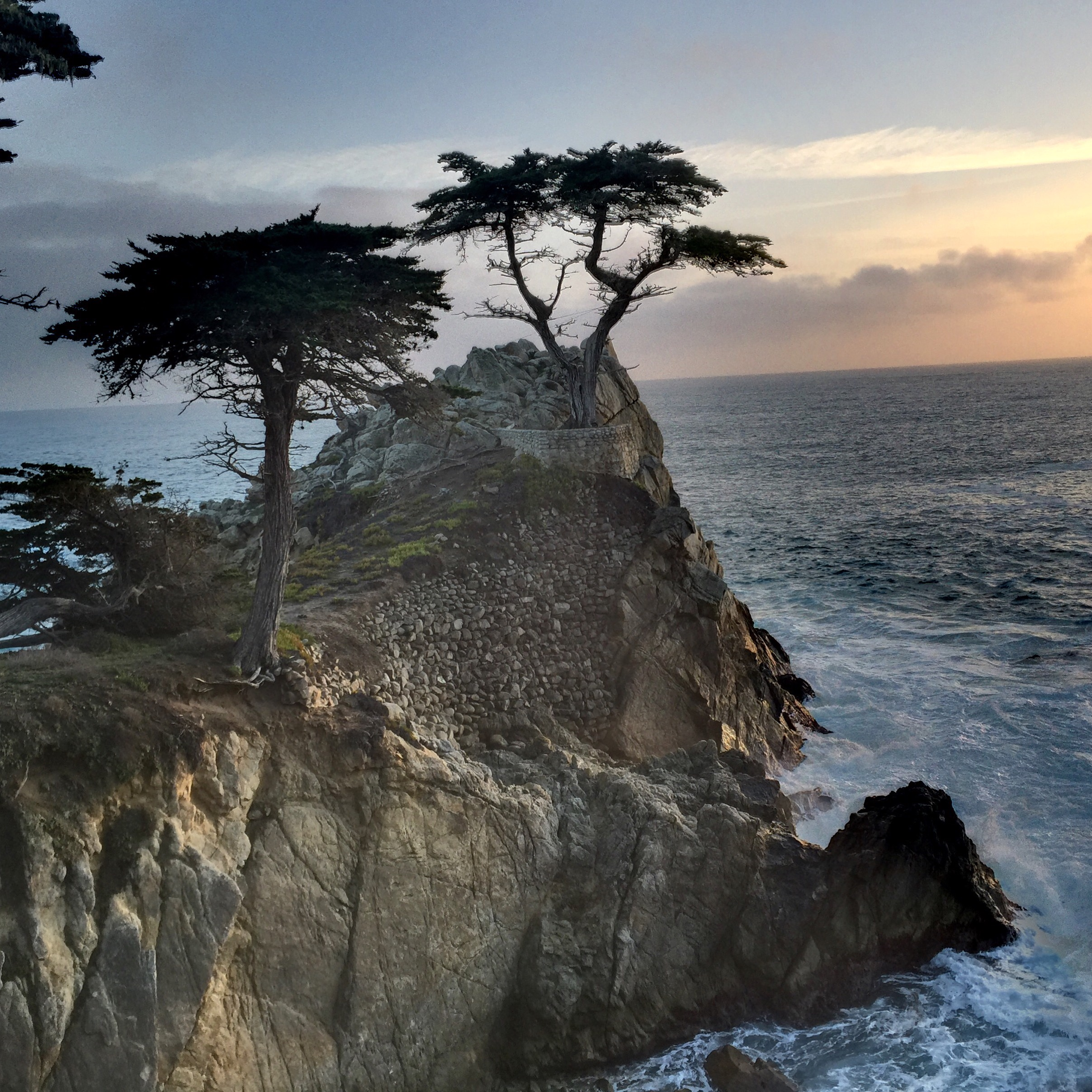 File:Lone cypress tree.jpg