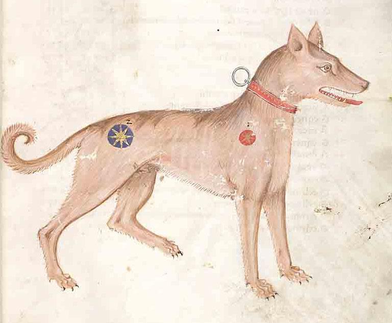 Latin Dog Names Female