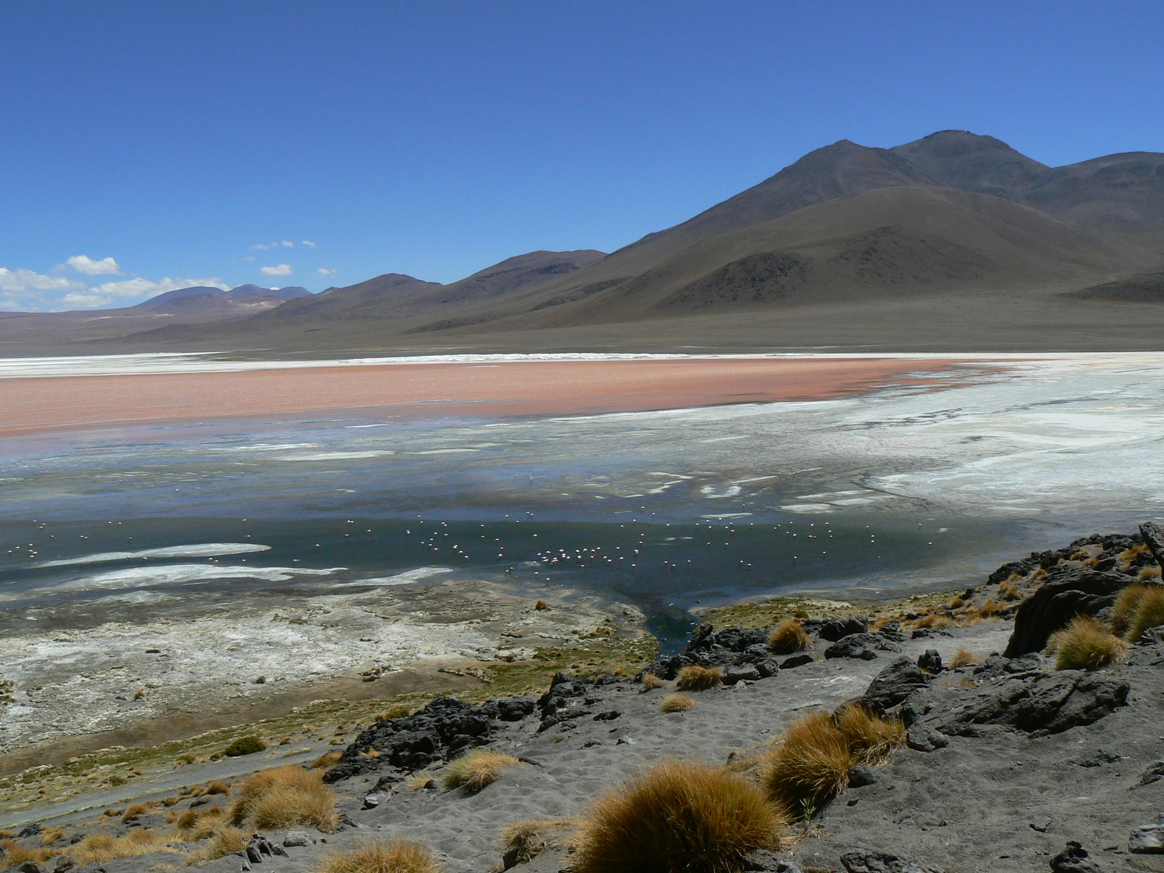 File:Phoenicopterus jamesi -Laguna Colorada -Bolivia-8d ...