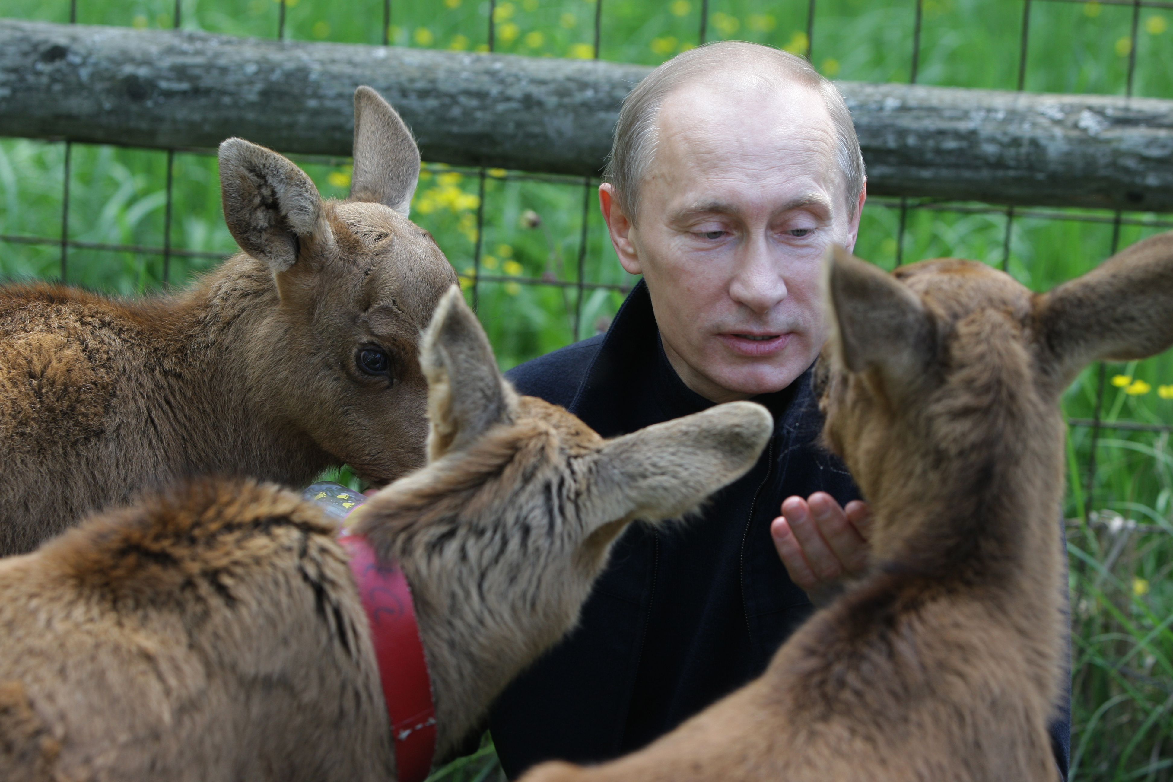 Владимир Путин вампир и животные