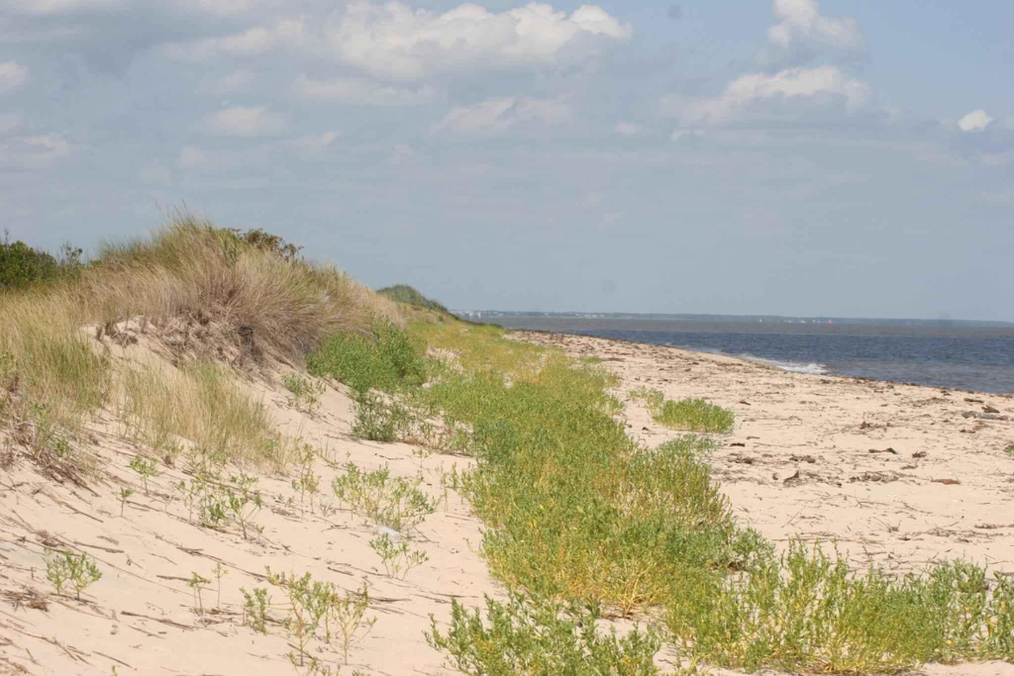 Sand Dunes File:Sand dunes along ...