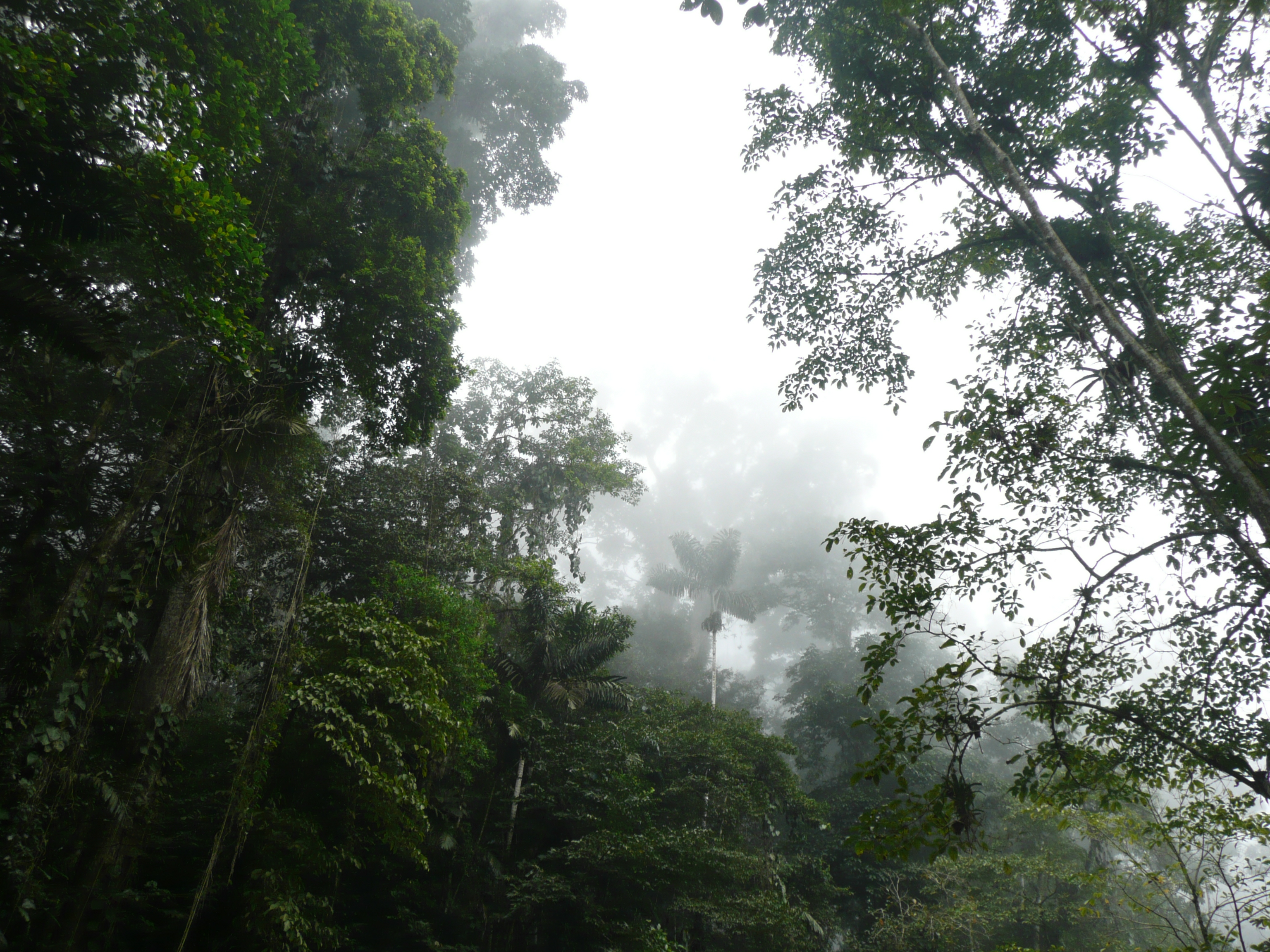 Depiction of Clima tropical