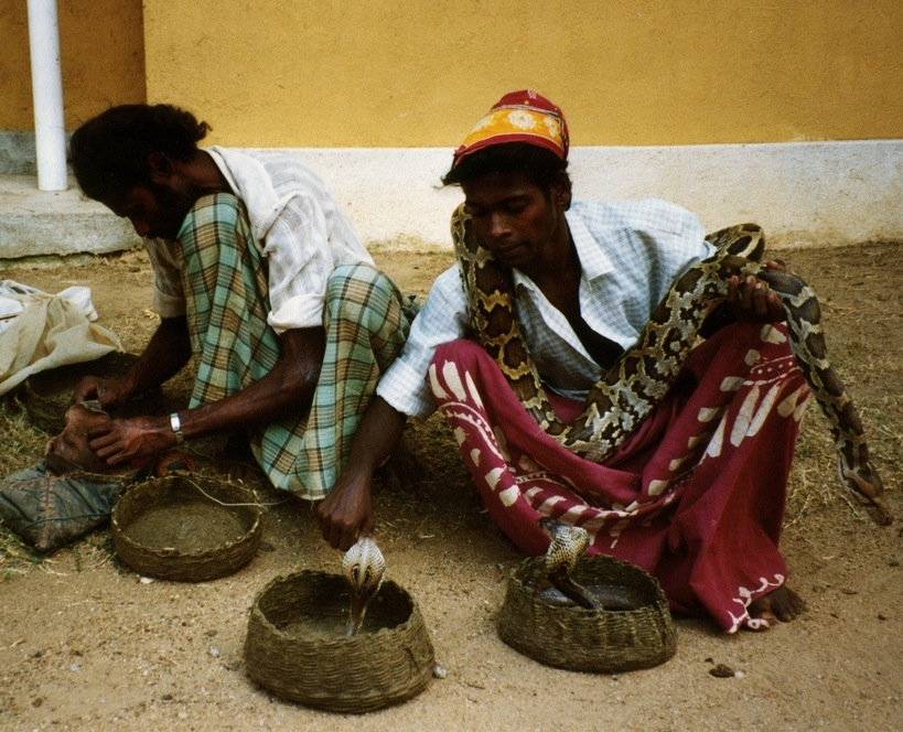 Two snake charmers with a python and a couple of cobras.