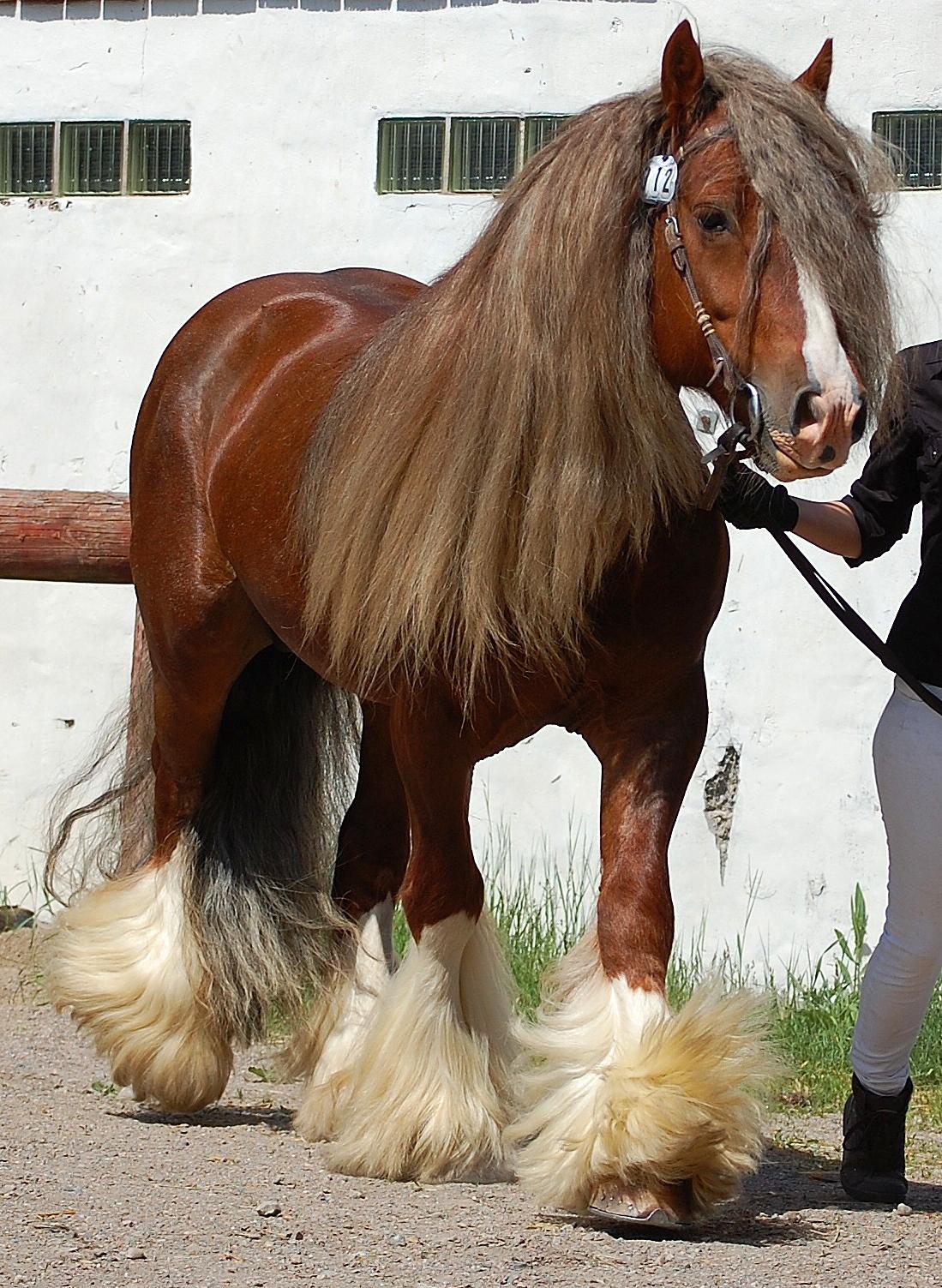 Horse breed registries - photo#23
