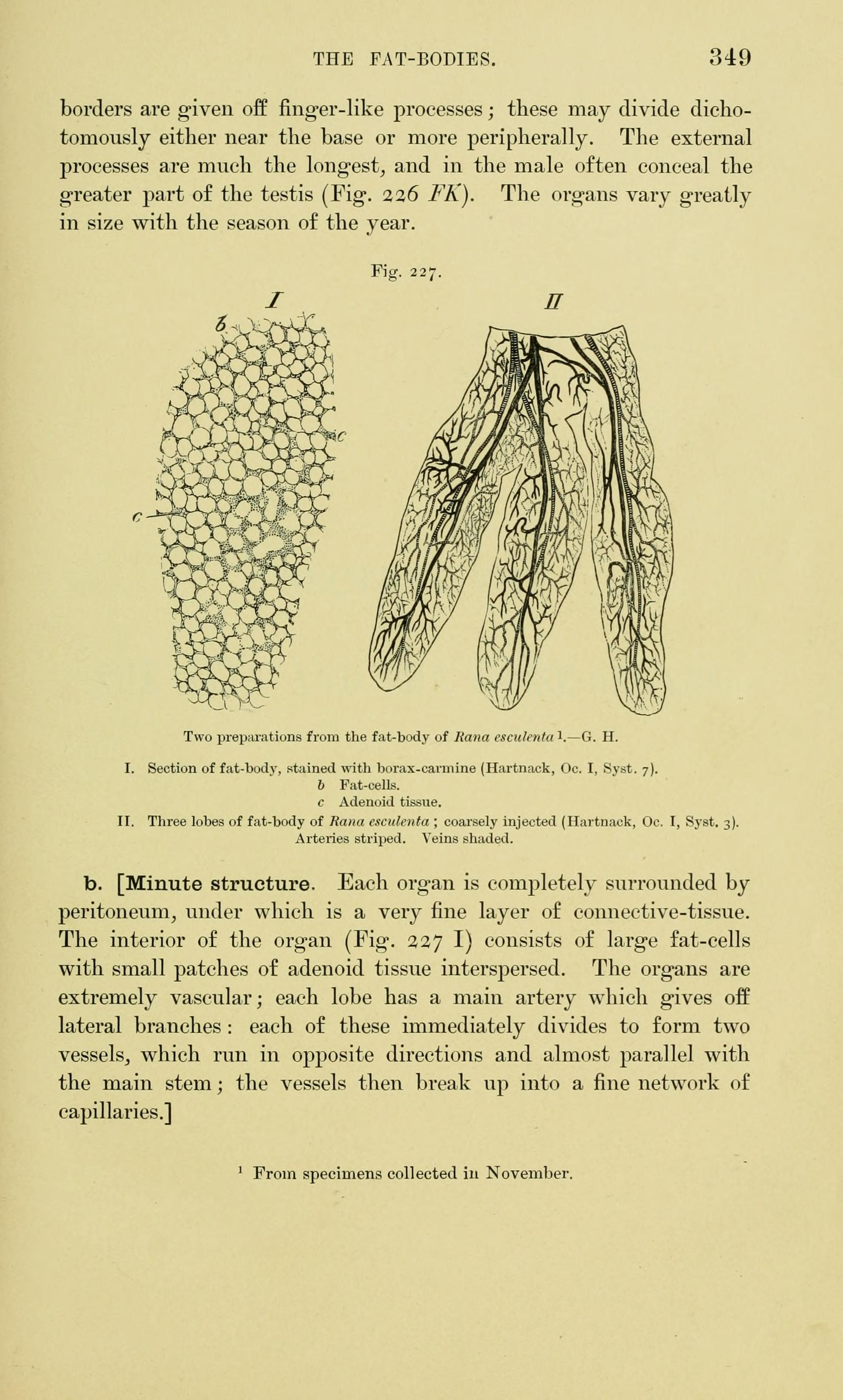 File:The anatomy of the frog (Page 349, Fig. 227) BHL7555119.jpg ...