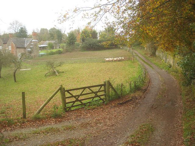 Track on the Brockhampton Estate - geograph.org.uk - 1136055