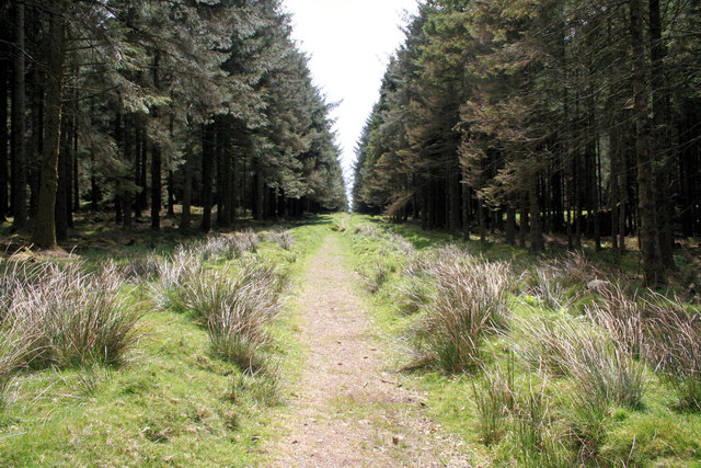 Tree lined Lych Way - geograph.org.uk - 992071