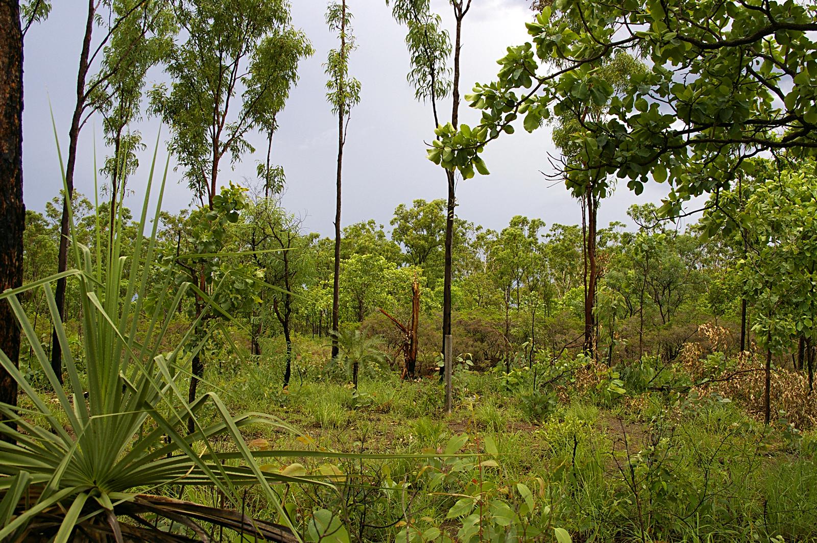 le foreste ancestrali