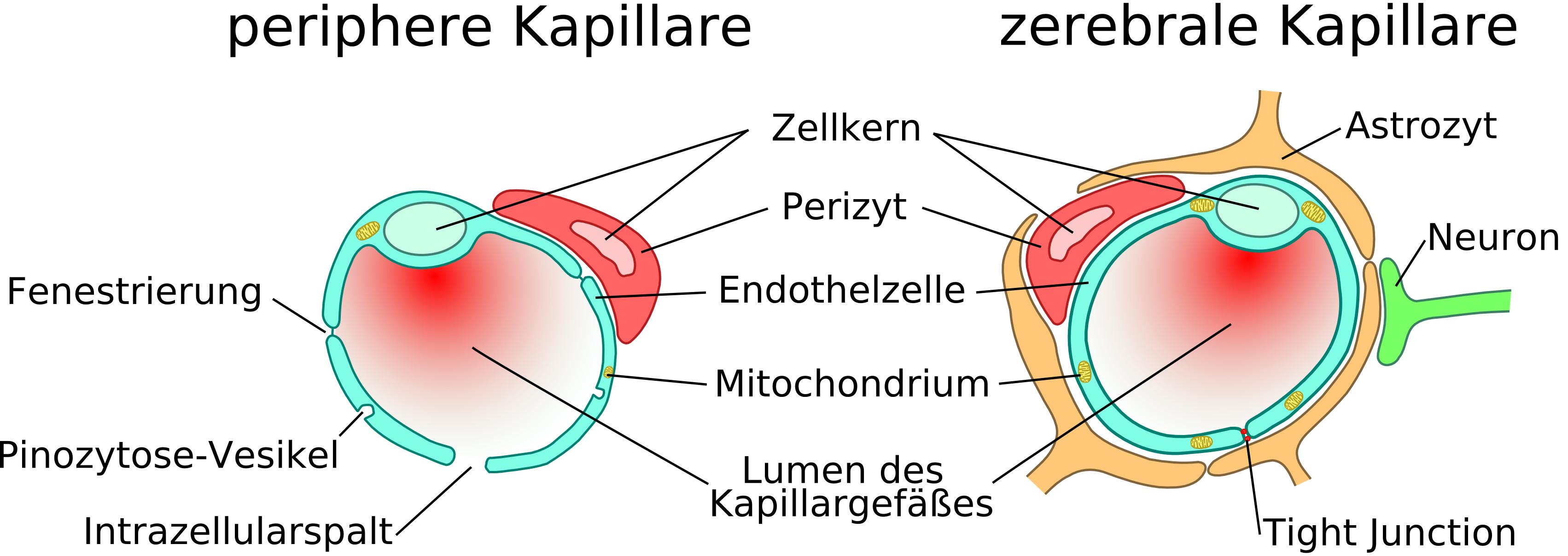 cerebral deutsch