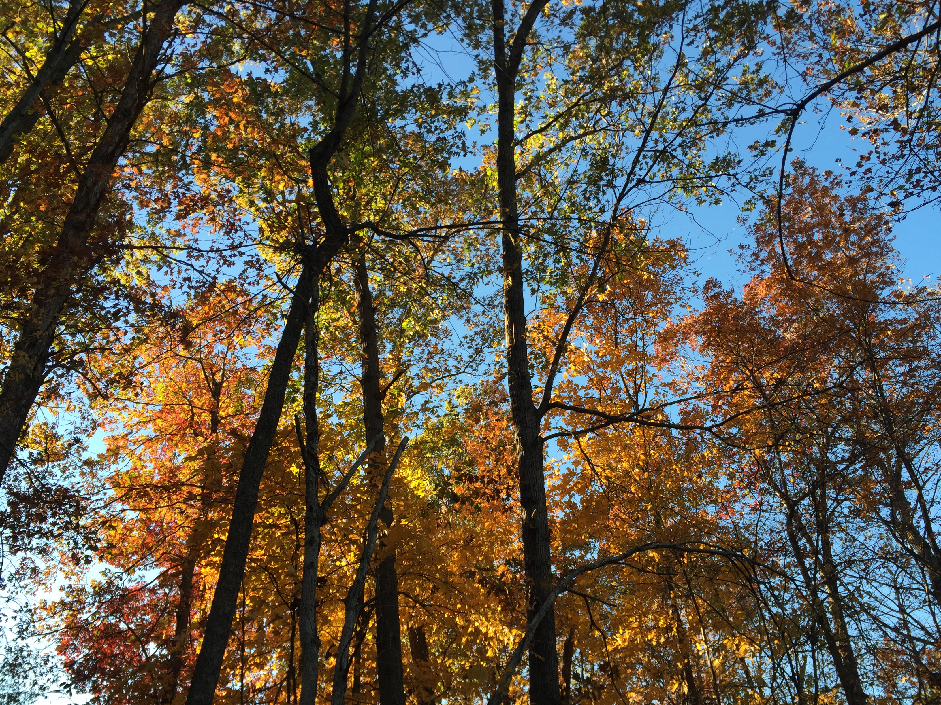 One Tree Hill English Stream