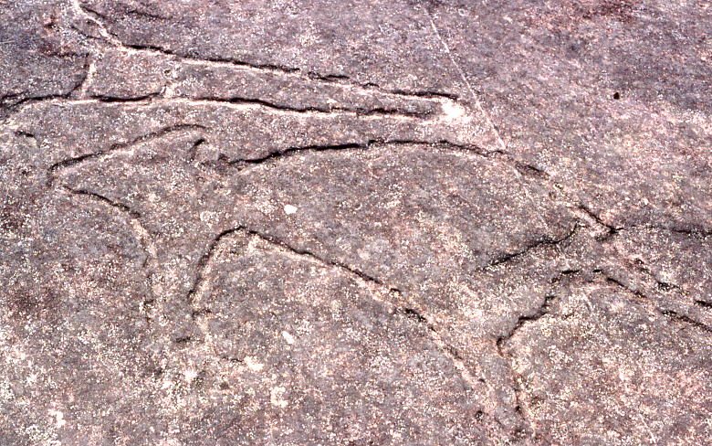 File:Aboriginal rock carvings, Terrey Hills, New South Wales, Sydney - Wiki0157.jpg