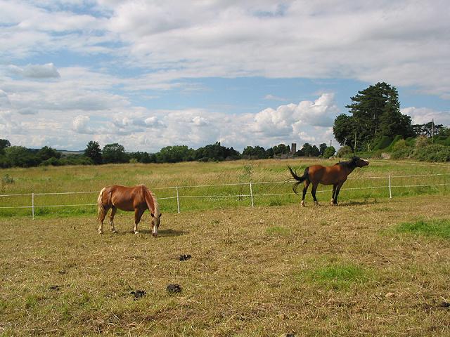 Animals grazing near Charlbury - geograph.org.uk - 489603