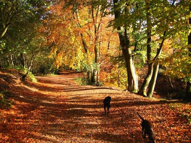 Autumn Colour, Delamere Forest - geograph.org.uk - 73478