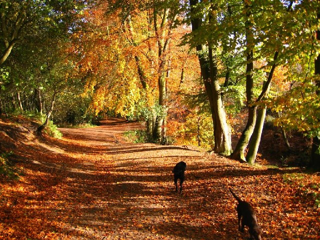 File:Autumn Colour, Delamere Forest - geograph.org.uk - 73478.jpg ...