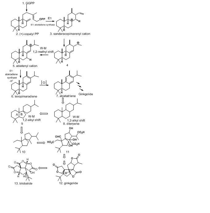 Biosintezmekanismo de Bilobalide.