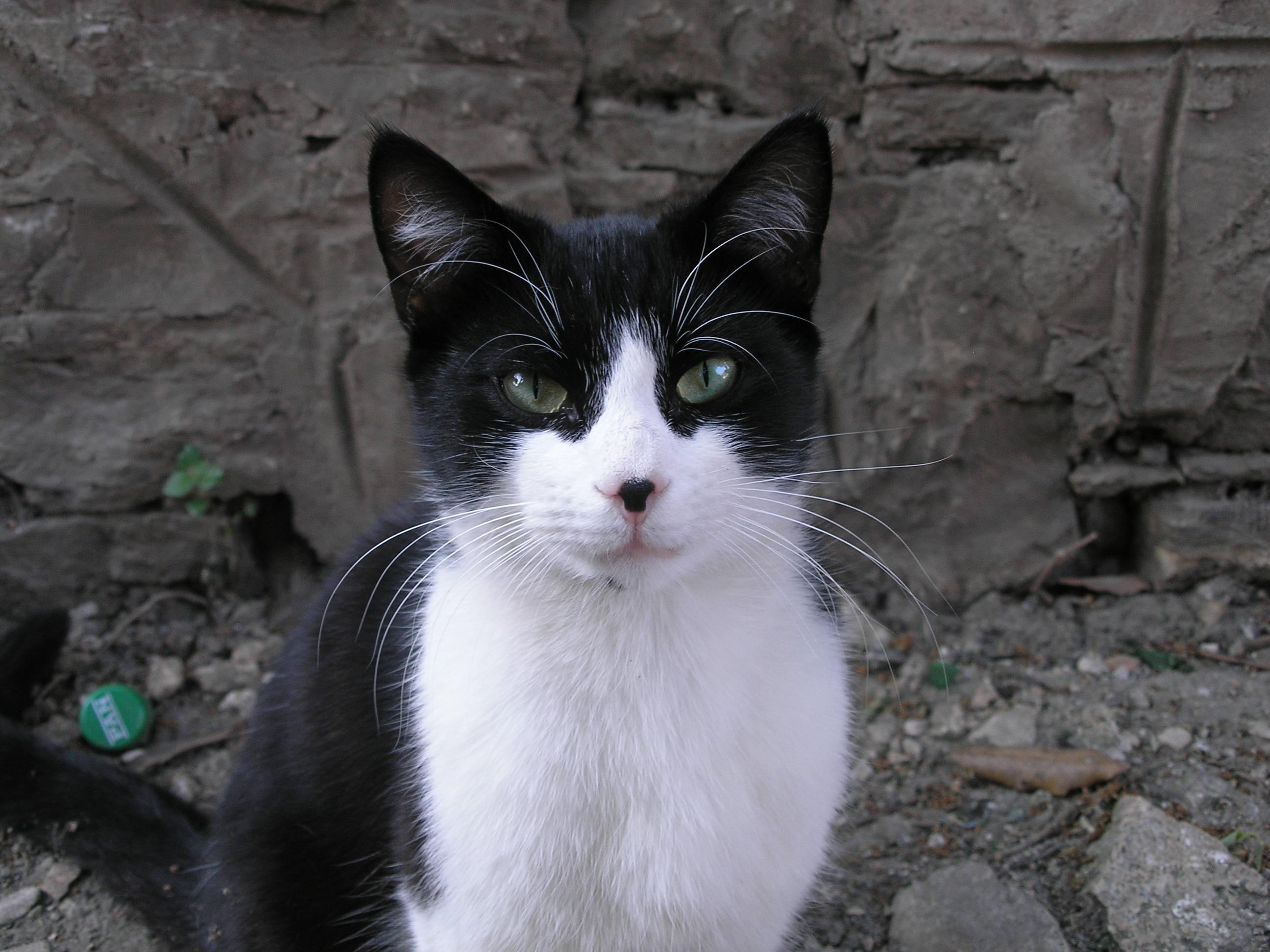 Black Cats Persian Songs