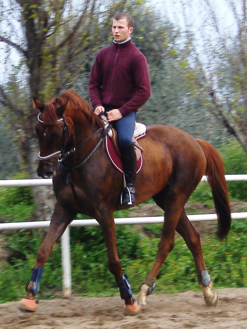 Angloarab sardyński - Horse Scanner