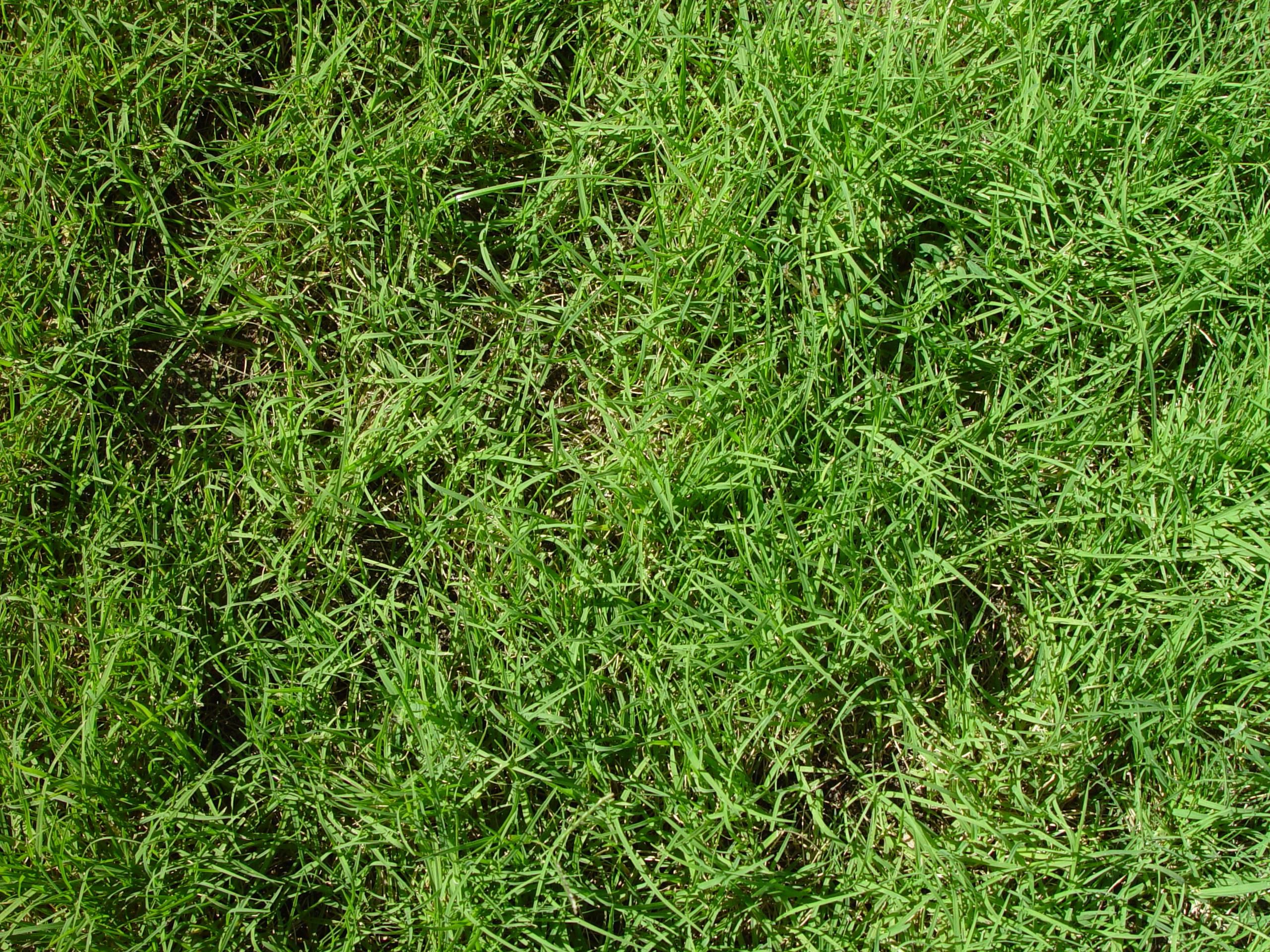 File:Cooch lawn texture.jpg - Wikimedia Commons